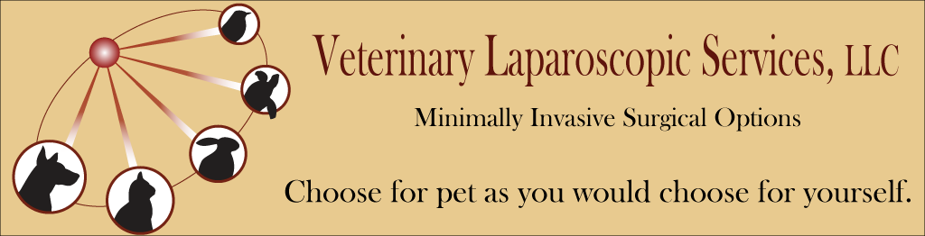 Veterinary Laparoscopic Services, LLC